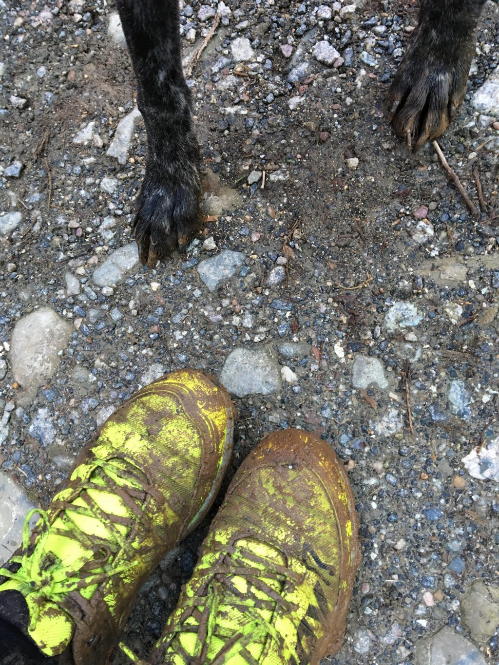 Inov8 Mud Claws & Muddy Paws after a Canicross Run